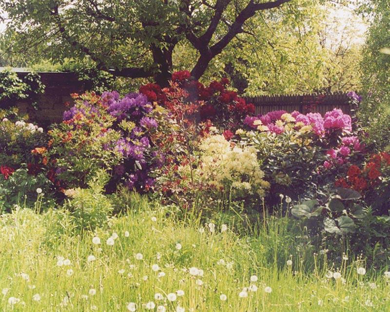 Ogród wiejski w Strzeniówce