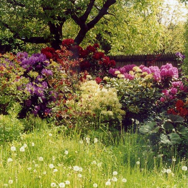 Ogródw Strzeniówce